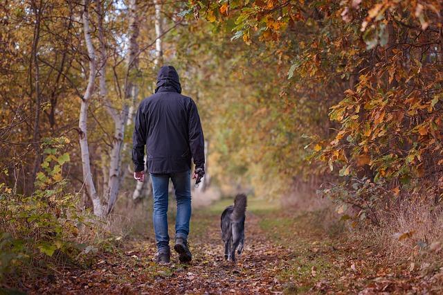 外で拾ってしまうこともあるノミ…その原因と駆除方法