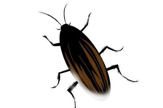 1匹見つけたら100匹いる!? ゴキブリは集団で生息しています