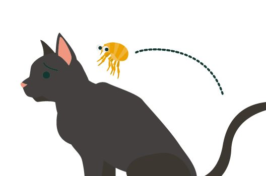 ネコノミの特徴と場所別「ペット・室内・室外」の駆除方法を解説!