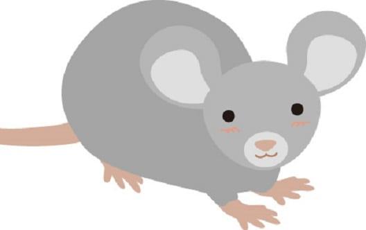 【イエダニ駆除マニュアル】発生原因はネズミ?対策・刺された症状